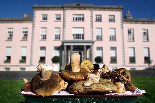 Longuville House Mushroom Hunt