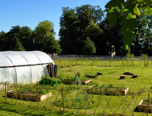Headlands Community Garden