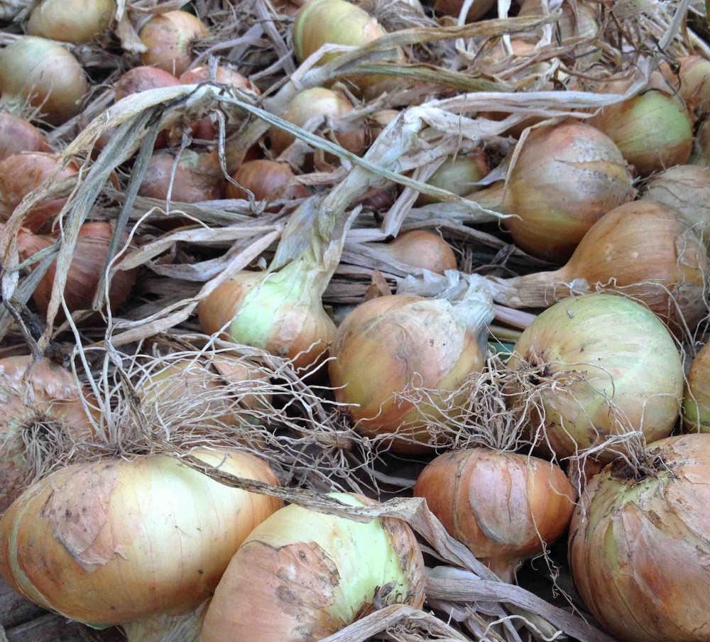 Irish Onions