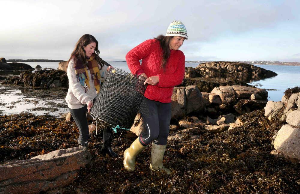 Mungo Murphy Seaweed