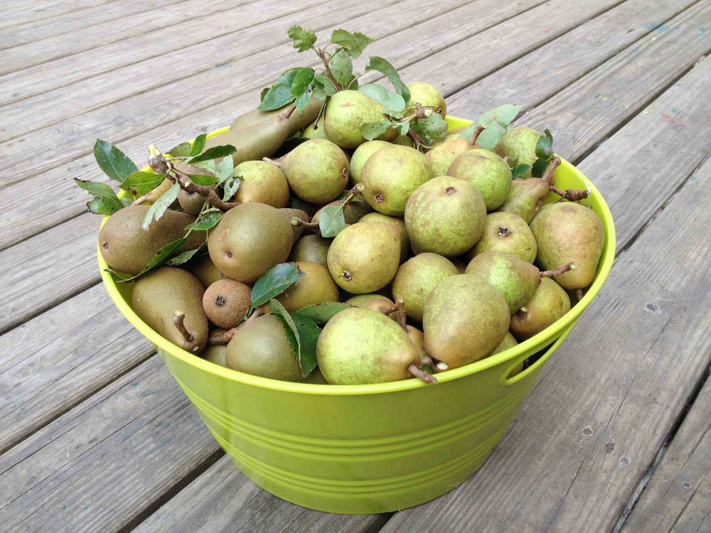 GIY Pears