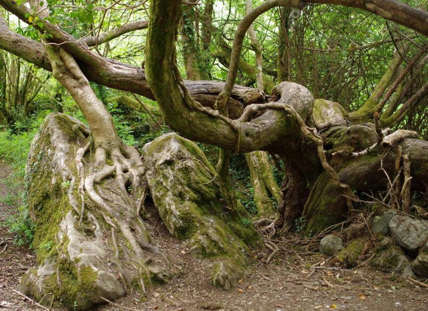 The-Hobbit-TreeLOWRES.jpg