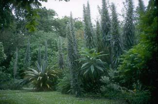 Seaforde Gardens - Seaforde Downpatrick County Down Northern ireland