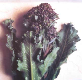 Buttered Purple Sprouting Broccoli