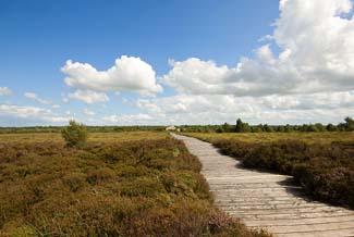 Corlea Trackway Visitor Centre - Kenagh County Longford Ireland