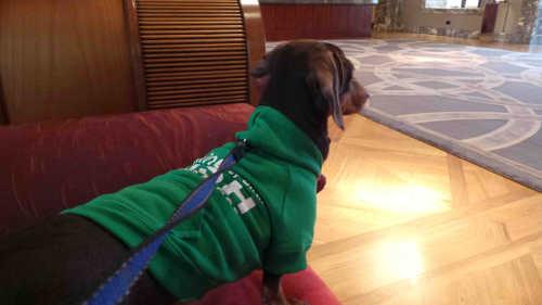 Intercontinental Dublin Hotel Dog In Foyer