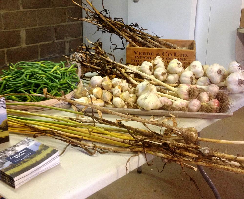Drummond House garlic
