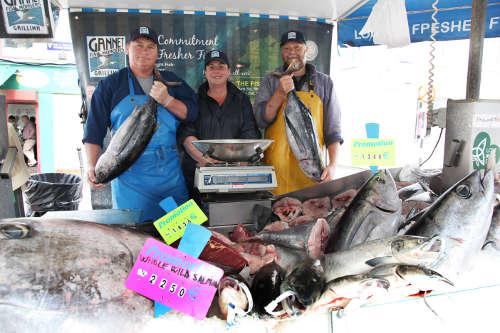 Gannet Fish Galway