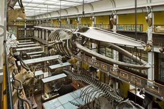Natural History Museum - Merrion Square Dublin 2 Ireland