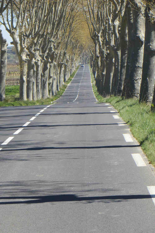The Road to Roujan