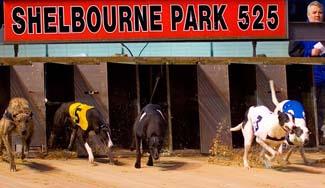 Shelbourne Park Greyhound Stadium - Dublin 4