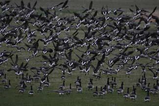 Wexford Wildfowl Reserve - Wexford County Wexford Ireland