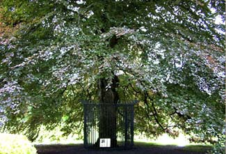 Coole Park - Gort County Galway Ireland