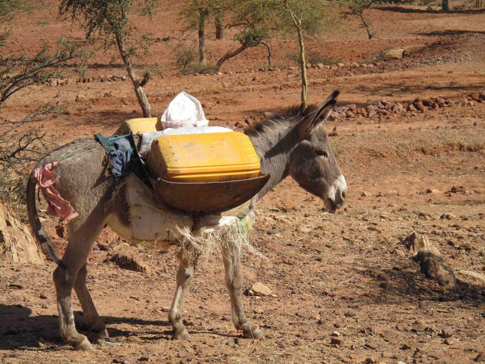 Ethiopian Farming