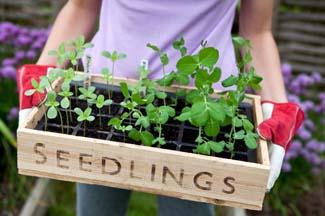 GIY - Seedlings