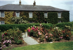Cairbre House - Roses