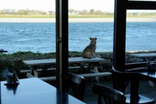 Linnanes Lobster Bar - New Quay County Clare Ireland - Bench with Dog