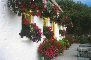 Teach Nan Phaidai - Aran Islands County Galway Ireland - flowers