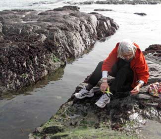 Darina Alen - Foraging for seaweed