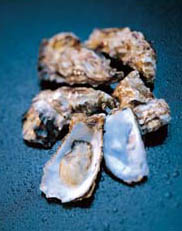 Gigas Oysters