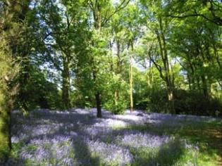 Ballyvolane House - Garden Fermoy County Cork Ireland