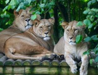 Belfast Zoo - Belfast Northern Ireland