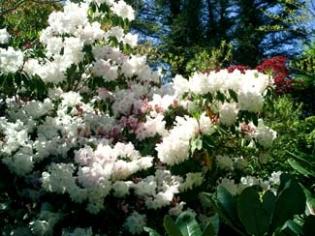 Kimokea Gardens - Campile County Wexford