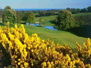 Druids Heath - 13th