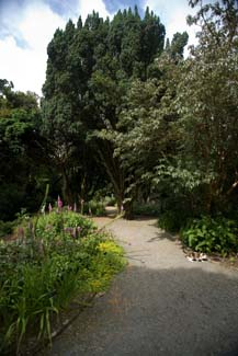 Kilmacurragh Arboretum - National Botanic Garden - Kilbride County Wicklow Ireland