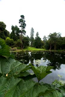 Kilmacurragh Arboretum - National Botanic Garden - Kilbride County Wicklow Ireland