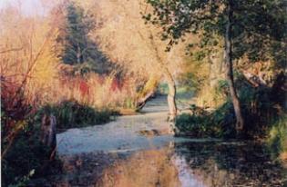 Knockabbey Castle - Autumn