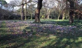 National Botanic Gardens - Dublin Ireland