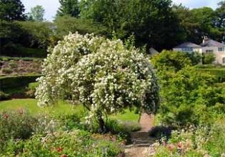 Knockmore Garden - Enniskerry County Wicklow Ireland