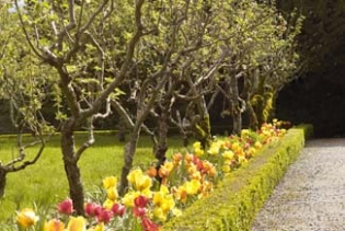Lismore Castle Gardens - Lismore County Waterford ireland - orchard path