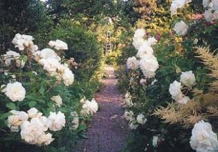 Rathmichael Lodge - Garden Dublin