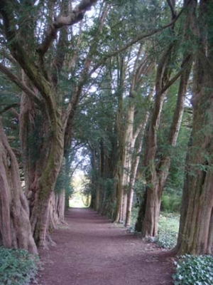Lismore Castle Gardens - Lismore County Waterford ireland - Yew Tree Walk